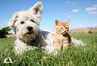 Photo of a cat and a dog